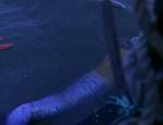 Merman Near A Boat