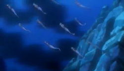 South Atlantic Mermaids - Swimming