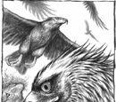 Vereut Eagles