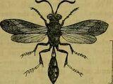 Cliff hornets
