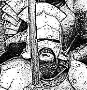 Orthanc Warrior