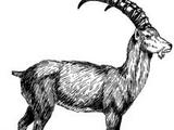 Grey Hill goats