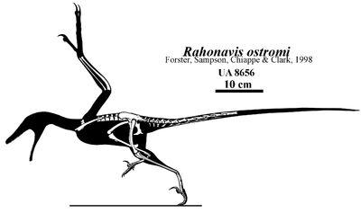 Rahonavis-ostromi-skeleton