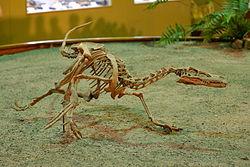 File:Velociraptor Wyoming Dinosaur Center.jpg