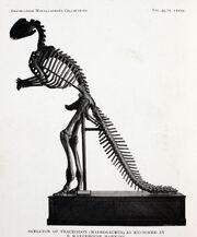 Hadrosaurus mount