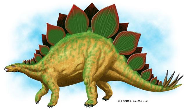 File:Stegosaurus-Neil-Riehle.jpg