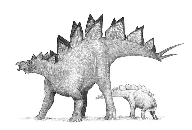 File:Stegosaurus-Alnus.jpg