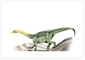 File:Anchisaurus-1.jpg