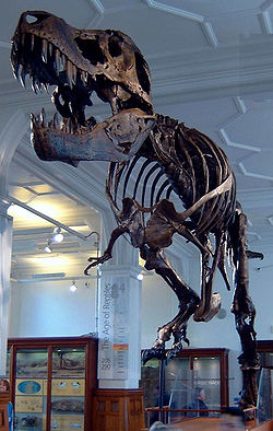 File:The Trex at Manchester Museum.jpg