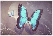 11 Morpho Butterfly