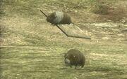 South America guinea pigs
