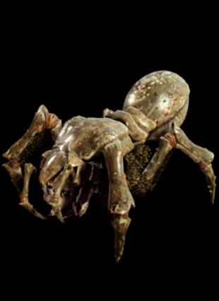 Spiderbug | Metro Wiki | FANDOM powered by Wikia