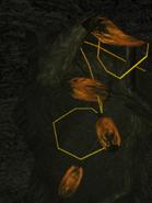 Grupo de sacos de savia