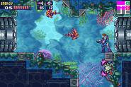 Arrecife del Setor 4
