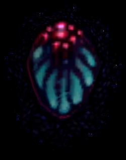 Ing Larva