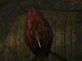 Кровоцвет