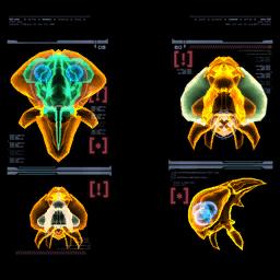 PhazonMetroidScan