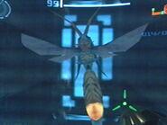 Avispa guerrera en la fragata orpheon1