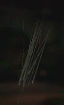 Sandgrass MP2