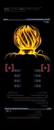 Escaneo del Hongo Kashh Maduro (derecha) MP3