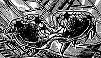 Metroid dividido por rayos beta