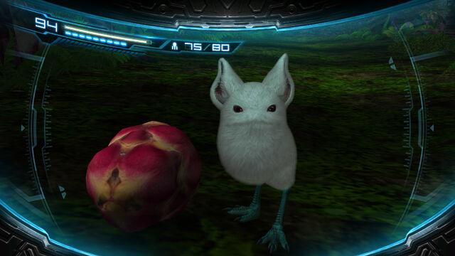 File:Little Birdie fruit.jpg