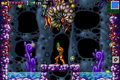 Larva Gigante atrapada mzm captura