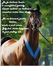 Bo-ja-kocham-konie