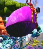 Kwiat muchołówka nwm