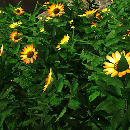 Sunflower variant in the wild