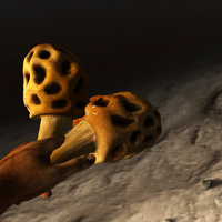 Sponge-like fungus in the hand