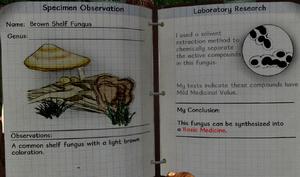 Brown shelf fungus notes