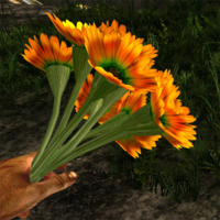 Orange prairie flower in hand