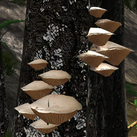 Wood gill fungus
