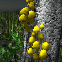 Yellow mushrooms in the wild