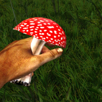 Red poisonous mushroom in the hand