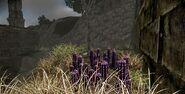 Violet cacti near ruins in badlands