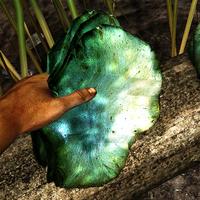 Pearl blue shelf fungus in the hand