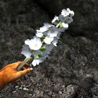 White-spiked prairie flower in hand