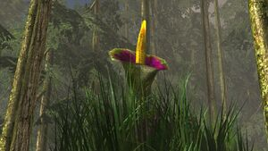 Titan plant