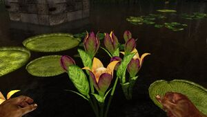 Bulbous fruit plant - plant X