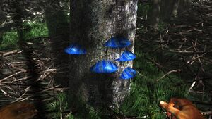 Ble scaley tree fungus