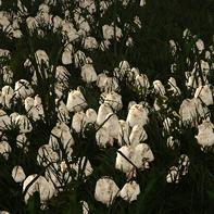 Pawn-shaped mushroom