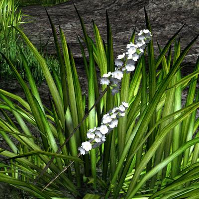 White-spiked prairie flower in wild