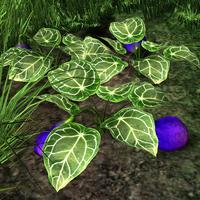 Fleshy purple fruit