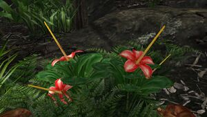 Large jungle flower