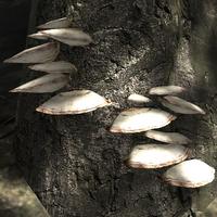 Brown shelf fungus