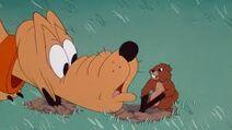 Gopher grabs pluto's ears