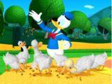 Donald's Ducks