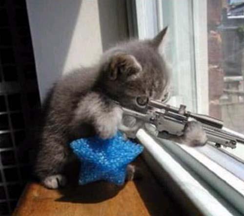 File:Sniper cat.jpg